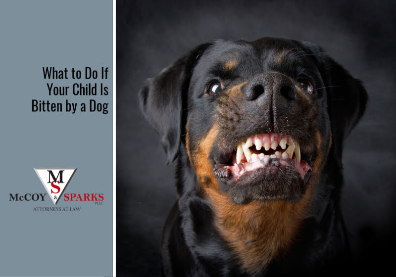 What to Do If Your Child Is Bitten by a Dog