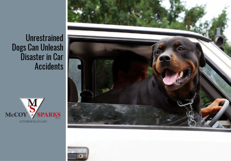 Unrestrained Dogs Can Unleash Disaster in Car Accidents