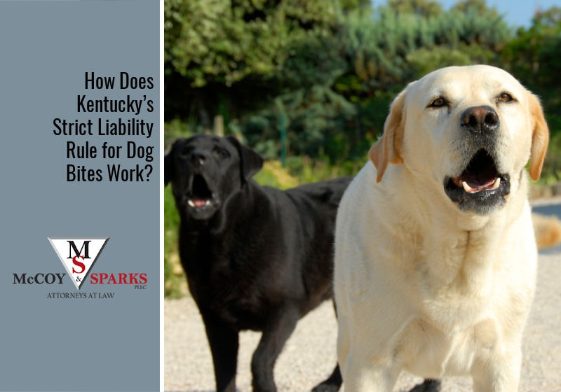 How Does Kentucky's Strict Liability Rule for Dog Bites Work?